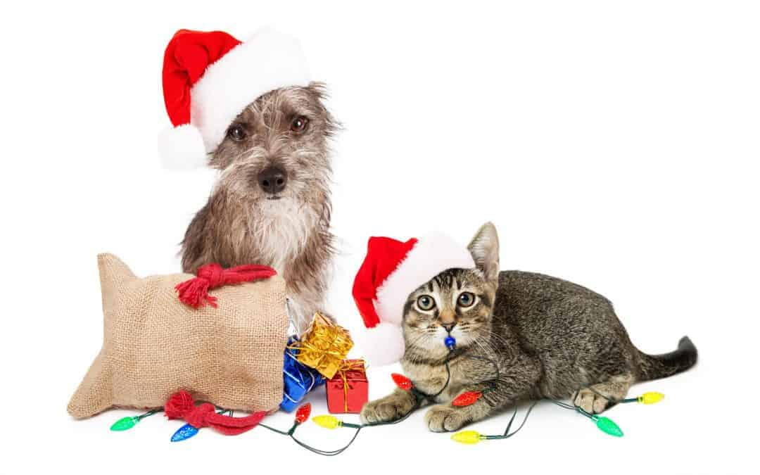 Holiday Gift Ideas for North Texas Pet Parents