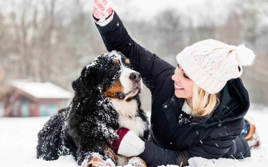 Winter Safety Tips For Frisco Pets