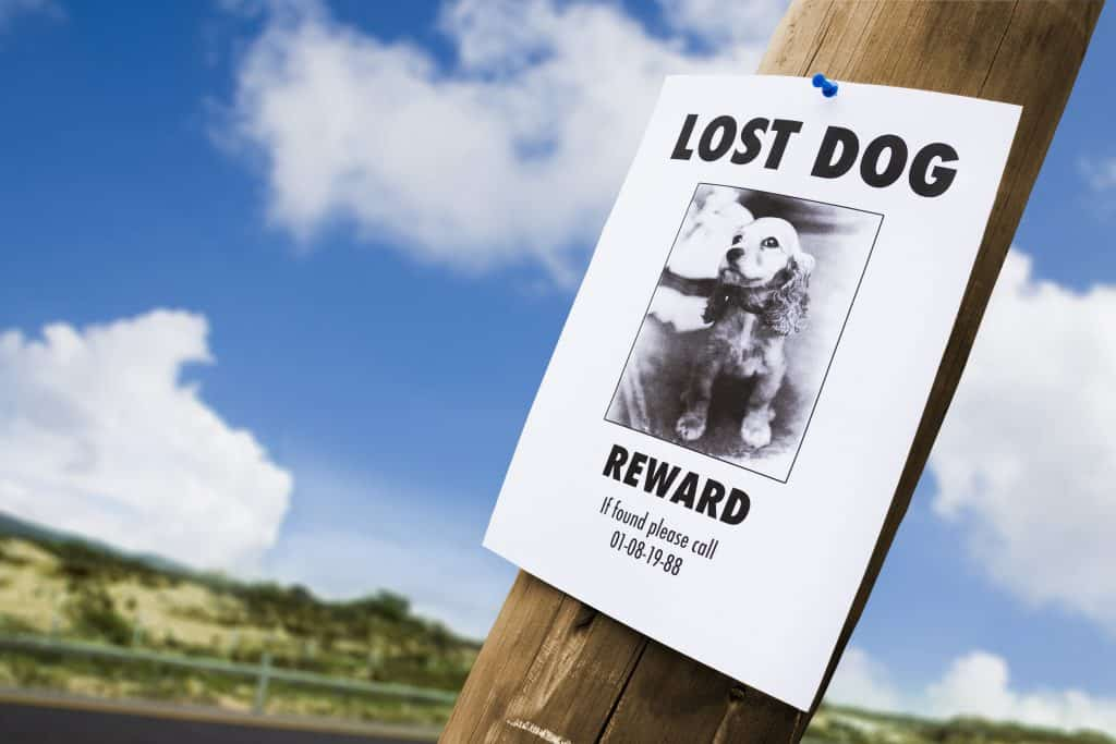Posting flyers when a pet is missing can be helpful in spreading awareness to find them