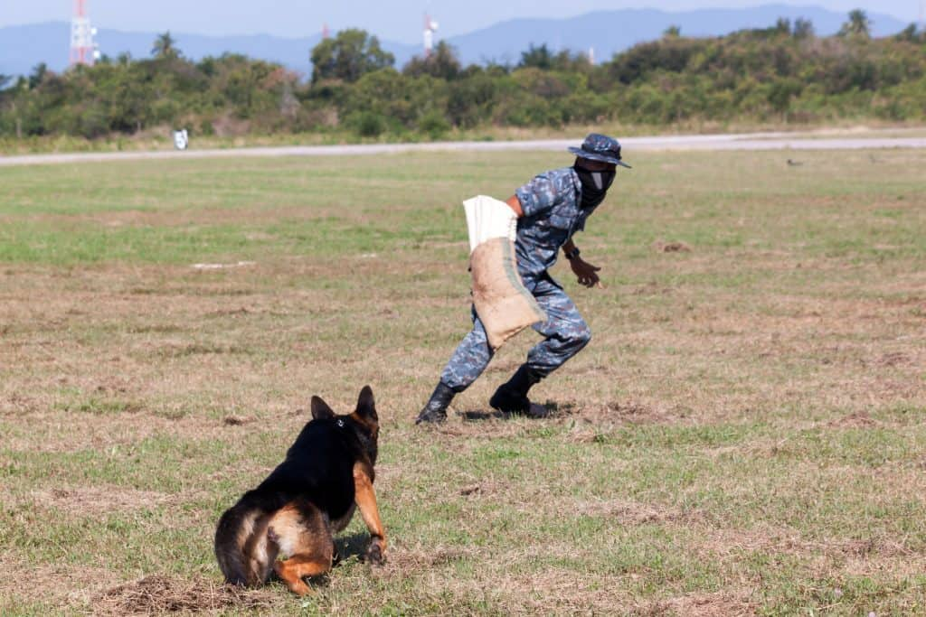 Soldiers from the K-9 dog unit works with his partner during a demonstration training