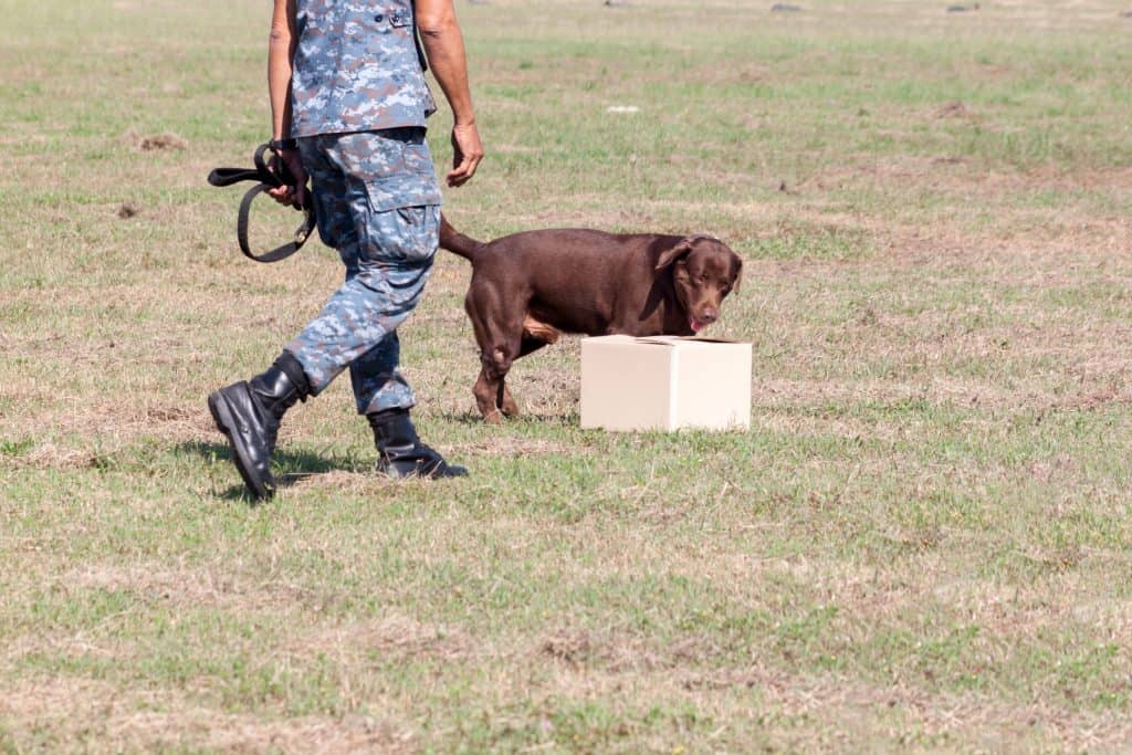 Soldiers from the K-9 dog unit works with his partner during a demonstration training.