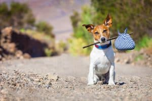 Having physical ID tags and microchips can help your lost pet return home quickly.