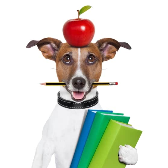 Dog with books and apple on its head