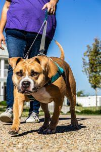 Dog Walking in Savannah Texas