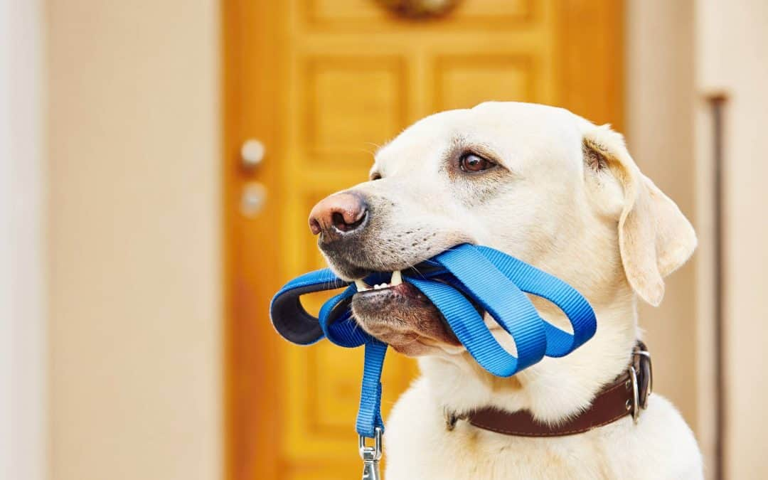 Savannah Texas Dog Walking: A Guide to Hiring a Dog Walker in Savannah Texas